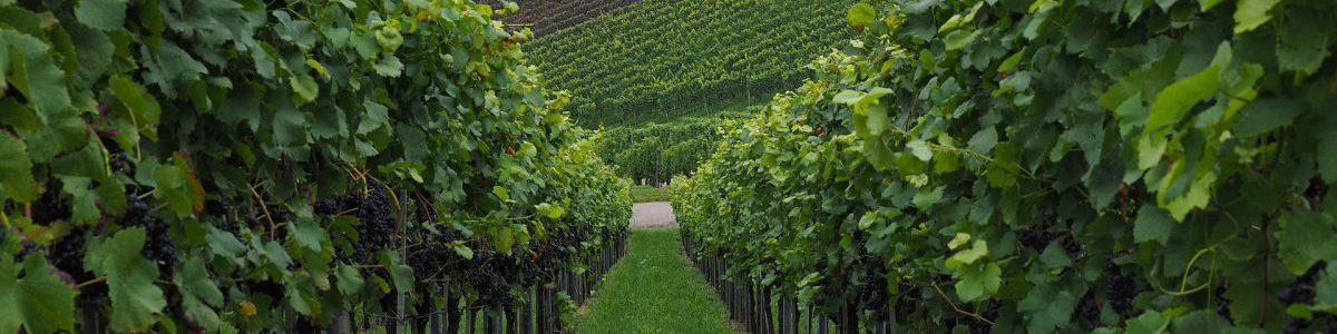 Permalien vers:Vins offerts: FranceItaliePortugal